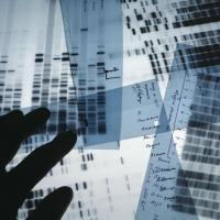Genetic defense may win sympathy in court but no shorter sentence