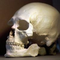 Study could solve controversy over ancient skeleton