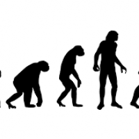How did humans start walking upright unlike their ancient predecessors?