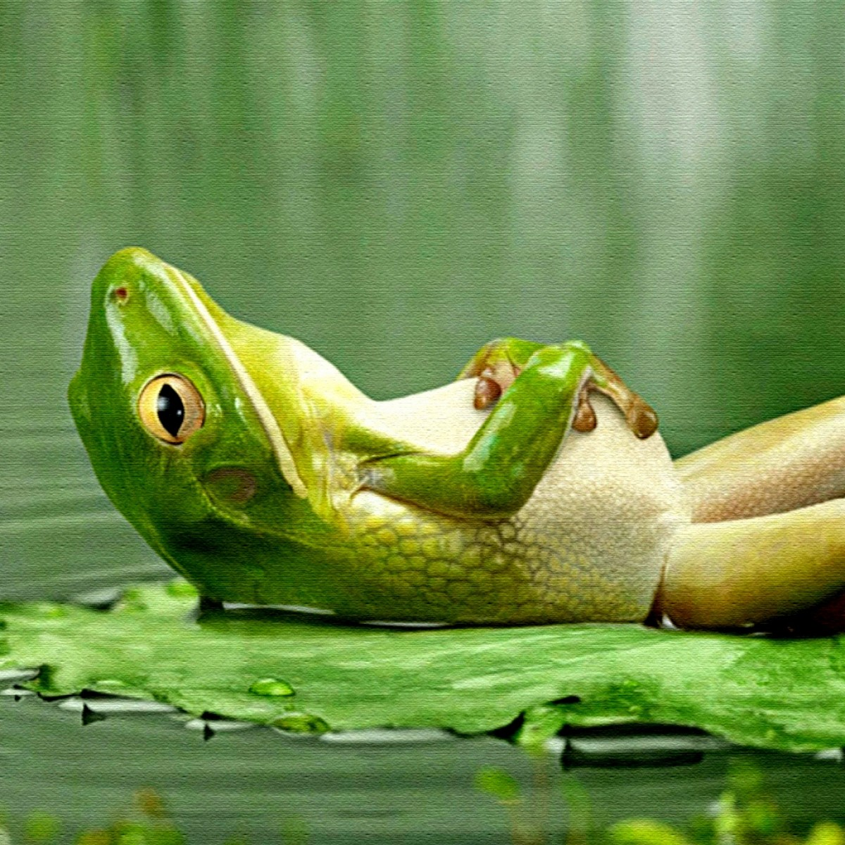 Frog said to describe its home through song