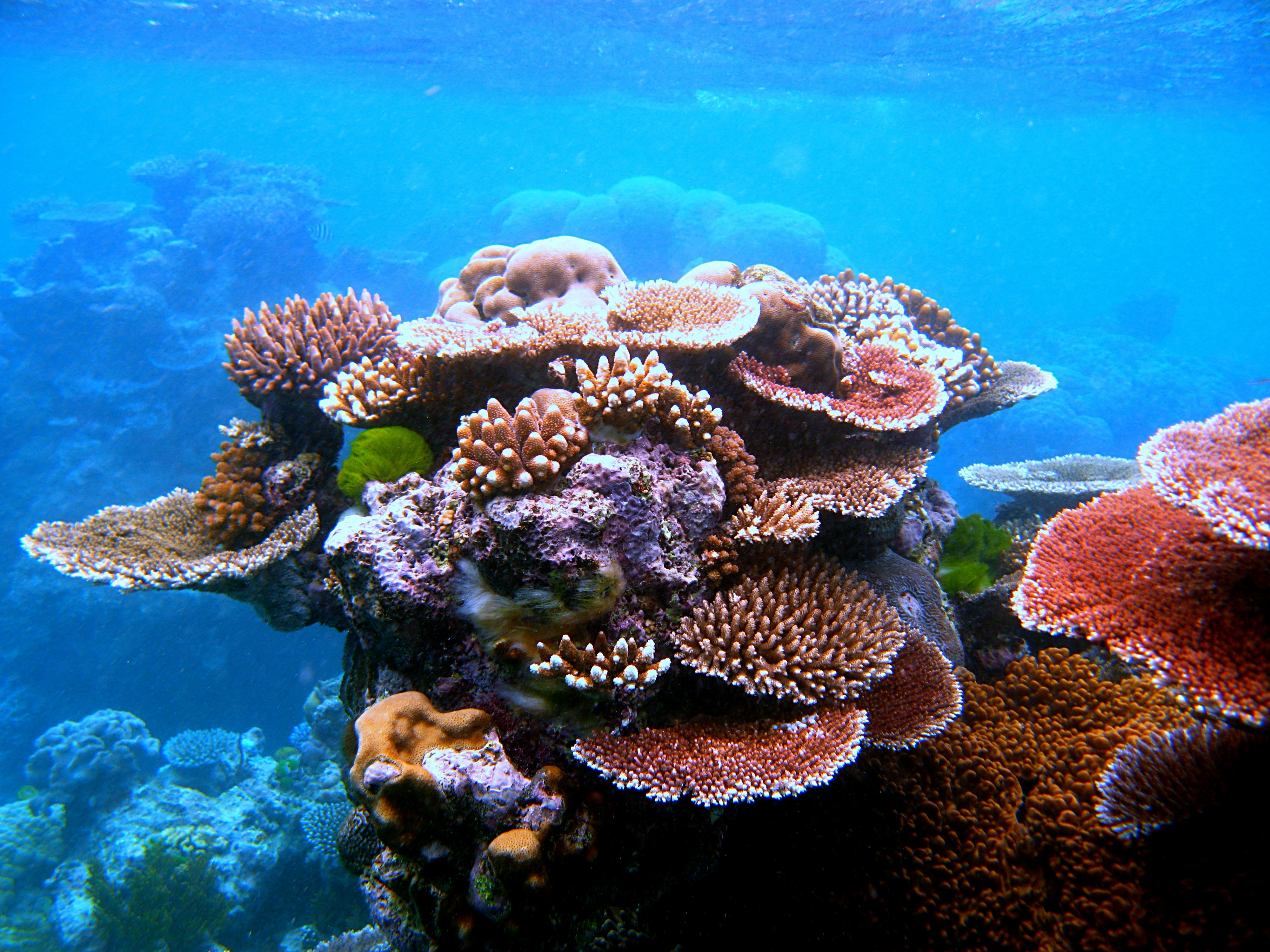 Caribbean coral reefs disappearing, study says