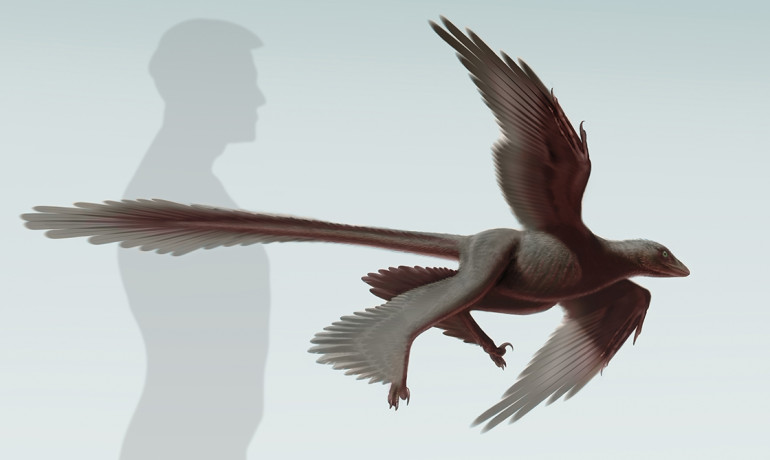 Fossil suggests flight was common among bird-like dinosaurs