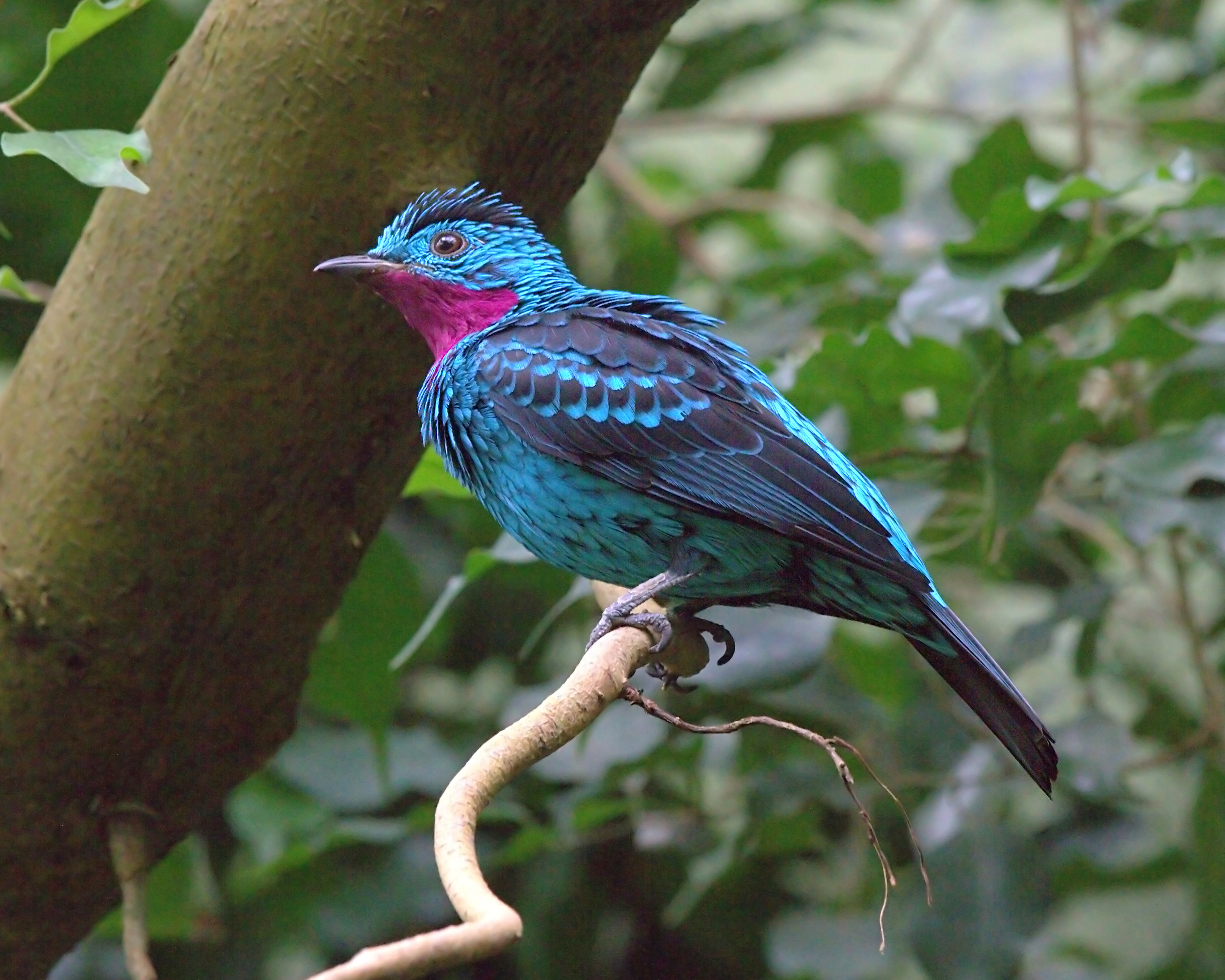 Family tree traces evolution of mysterious birds
