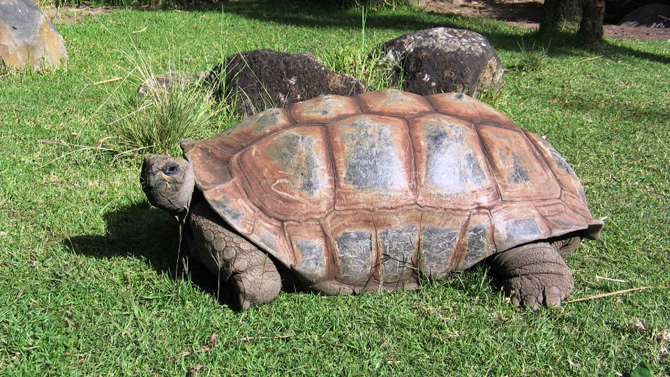 Giant tortoise makes 'miraculous' stable recovery