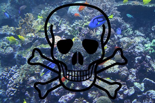 Ocean Life may face Mass Extinction : Study warns