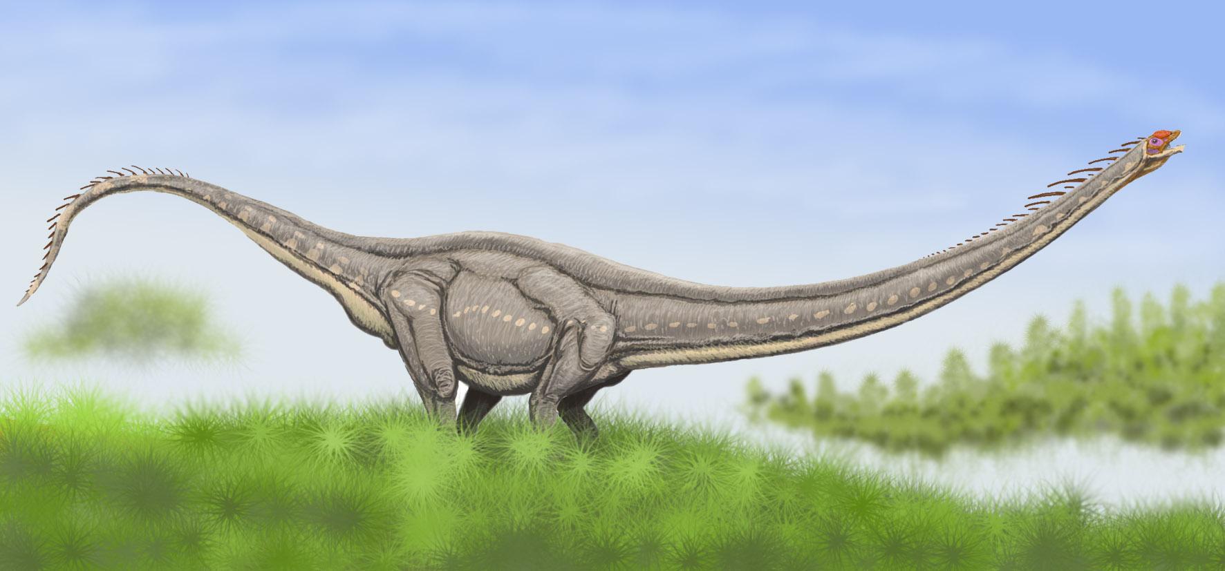 New find spotlights super-long-necked dinos