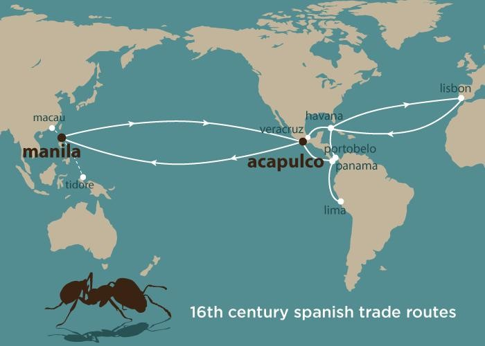 Fire ants spread globally on 17th-century ships, study finds