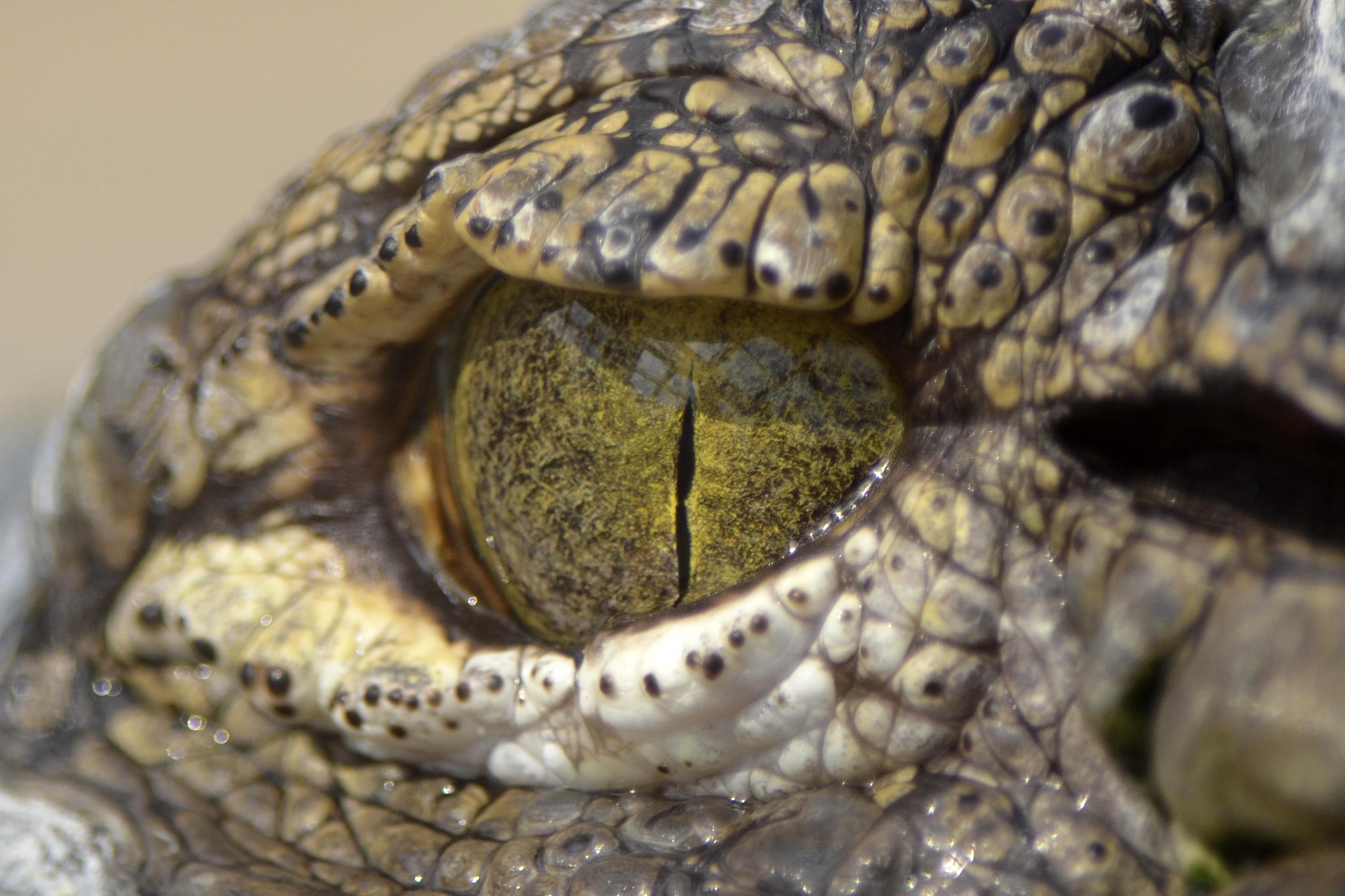 A land where strange crocodiles proliferated