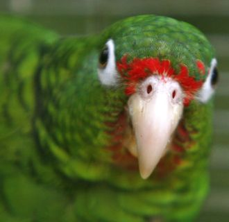 Parrots Can Think Like 4-Year-Olds