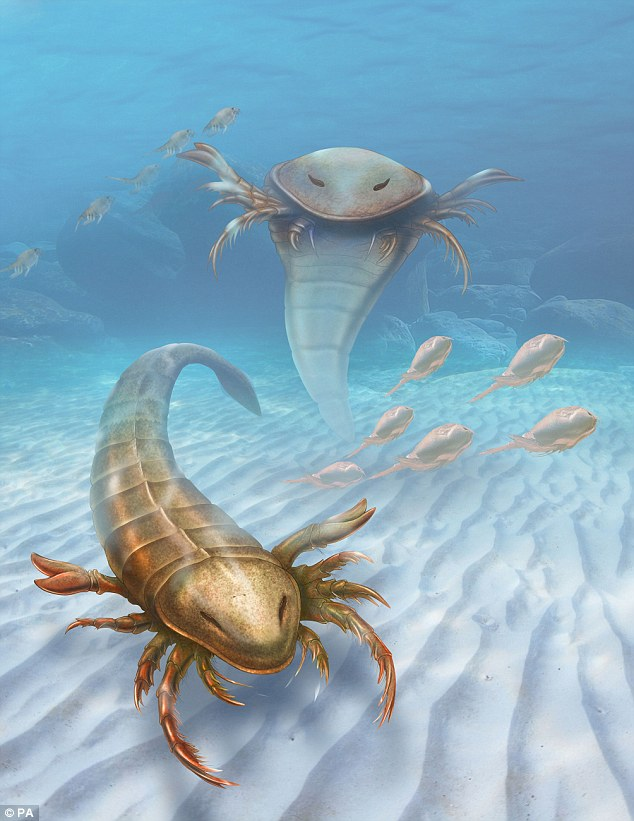 Giant sea scorpion fossils turn up