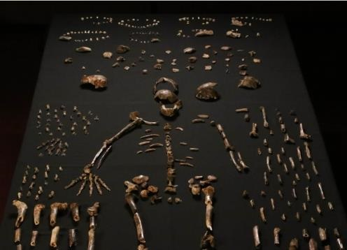 African chamber of secrets yields huge trove of human fossils