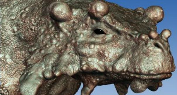 Knobby-Faced Beast May Be Earliest Known To Stand Tall On All Fours