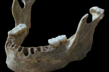 Modern Human Possibly Had Neanderthal 'Great-Great-Grandparent'