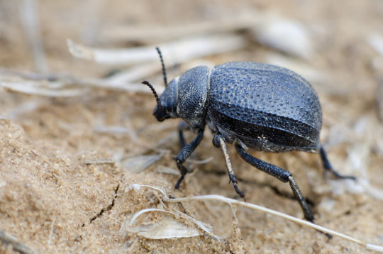 Bio-mimetic Frost free surfaces inspired by Beetles